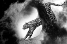 leopard-459761_640